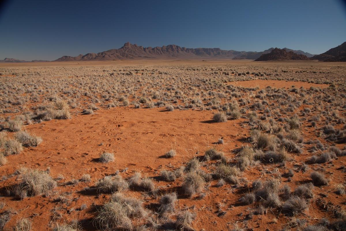 Fairy circles seem to result from the interactions between plants and termites, as both organisms compete for limited resources in the desert