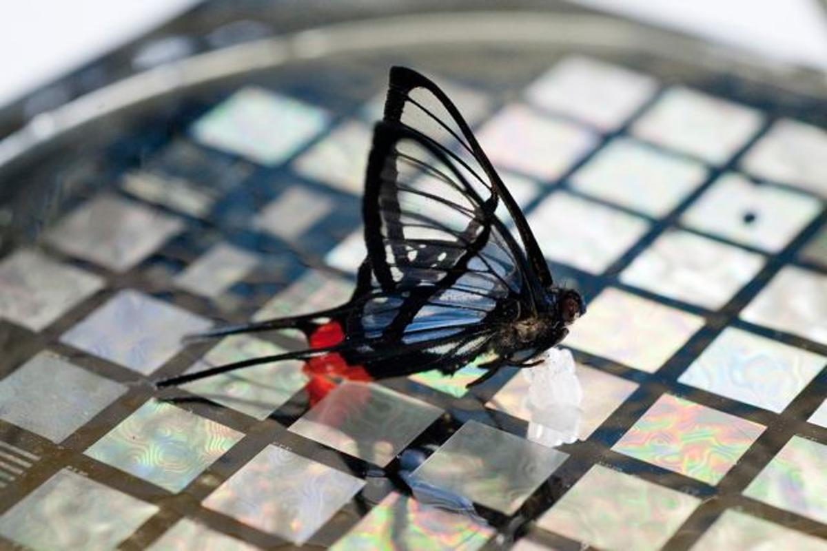 Stanford University's touch-sensitive artificial skin can detect the weight of a butterfly