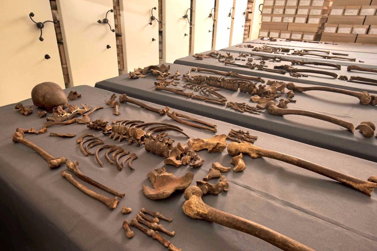The five skeletons that yielded the DNA from a plague-causing bacteria in their teeth