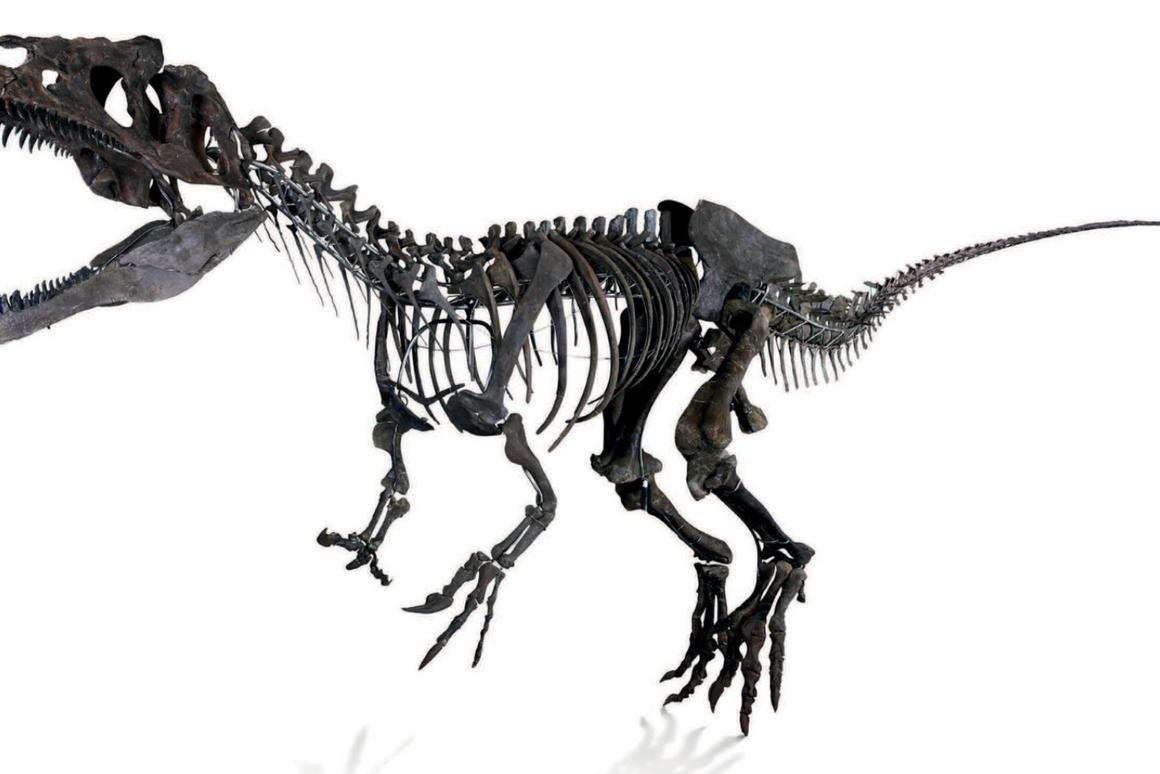This beast, believed to be from the Allosaurus family, originally called the Eastern Bighorn Mountains in Wyoming its home between 157 and 152 million years ago