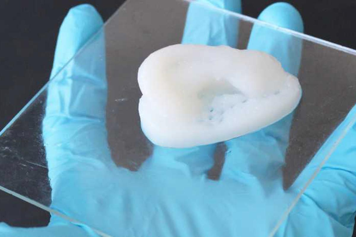 An ear cartilage model, made from the 3D-printed cellulose composite material