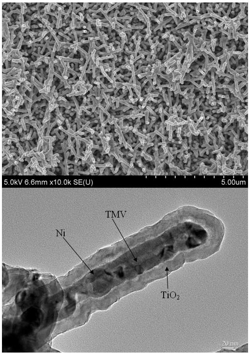 SEM image of Ni/TiO2 nanocomposite electrode (top), cross-section TEM image of an individual nanorod showing the core/shell nanostructure (Image: University of Maryland, College Park)