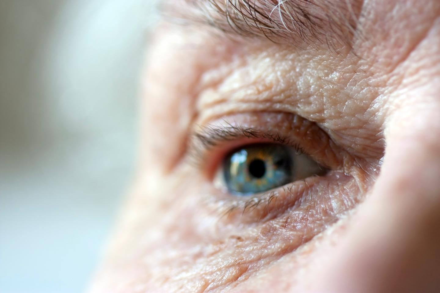 A new gene therapy has restored vision in mice with glaucoma or age-related vision loss