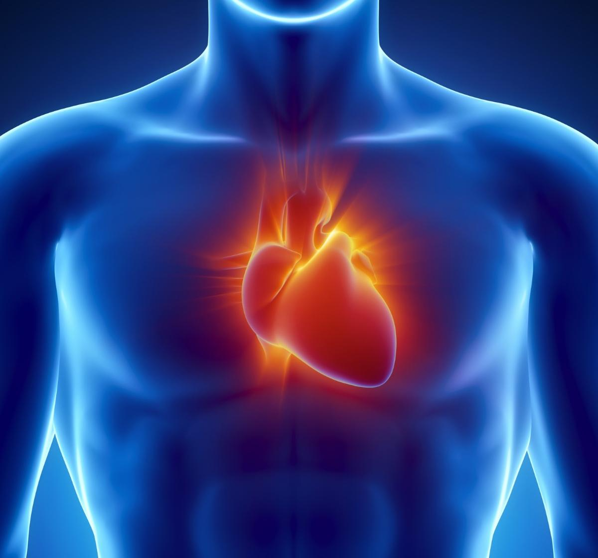 Researchers have developed a new CRISPRtechnique that can correct defects in heart tissue caused by DMD