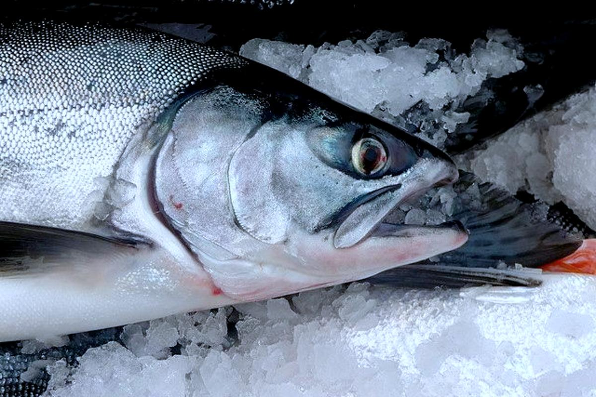 Scientists have created a rudimentary data storage device using salmon DNA (Photo: Isaac Wedin)