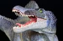 A deposit of tooth fossils confirm that Spinosaurus was an aquatic dinosaur
