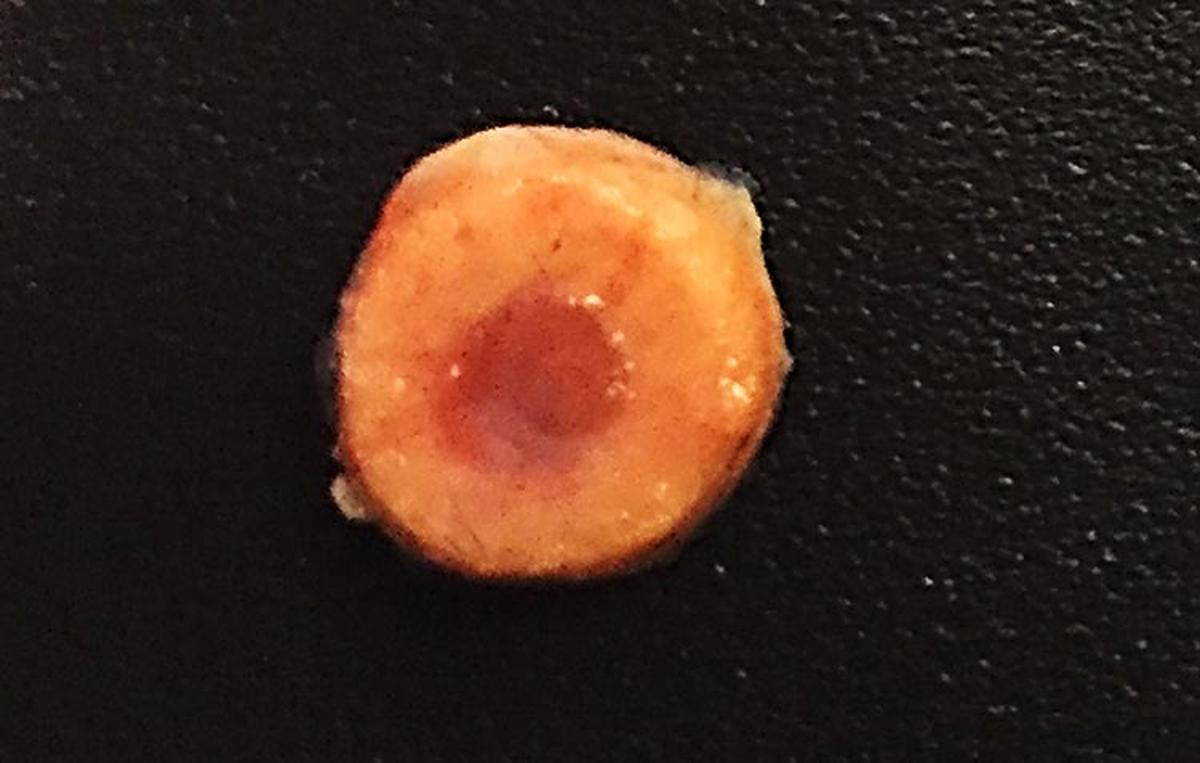 Engineered bone with functioning marrow