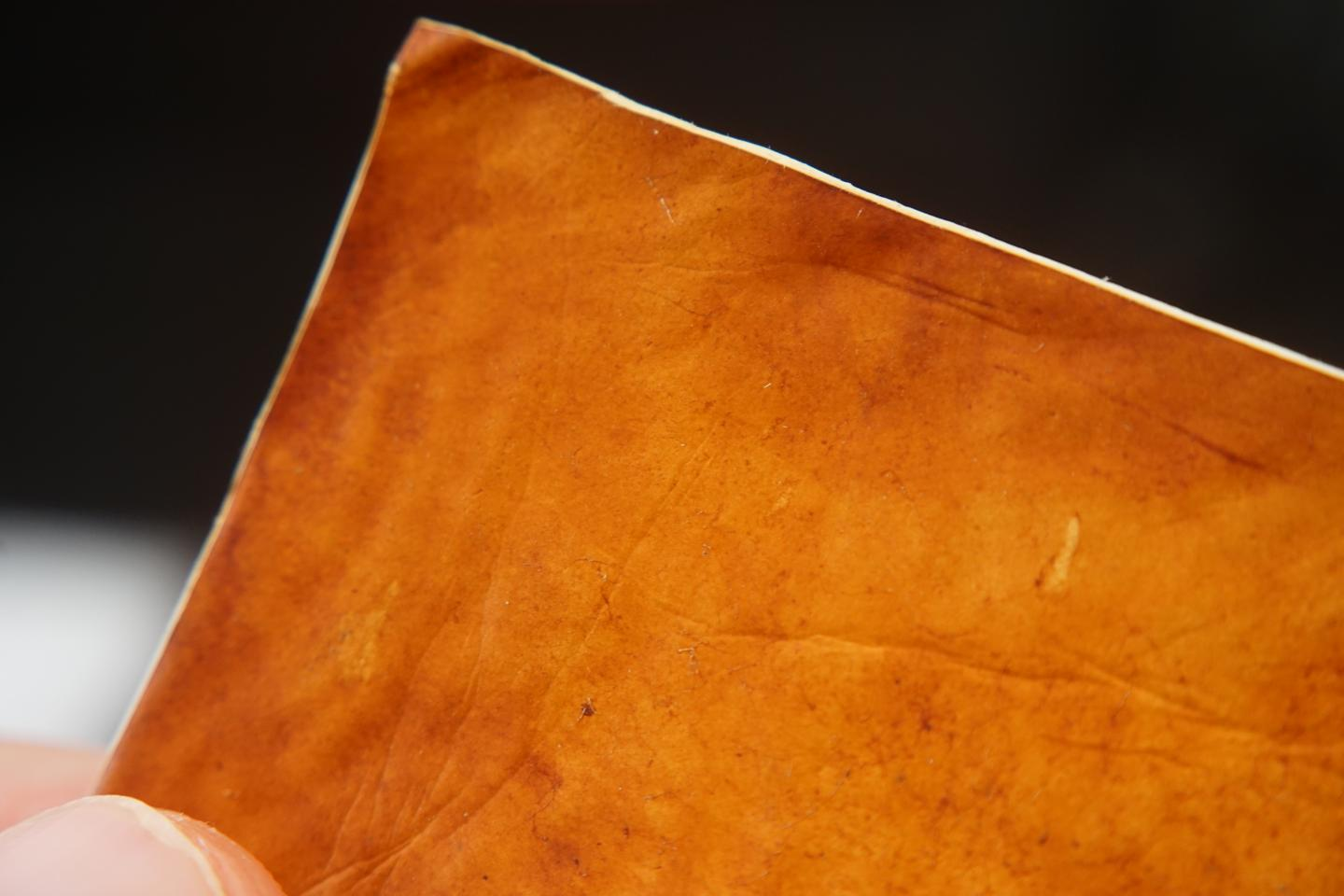 A closer look at the leather product developed from mycelium fungi sheets