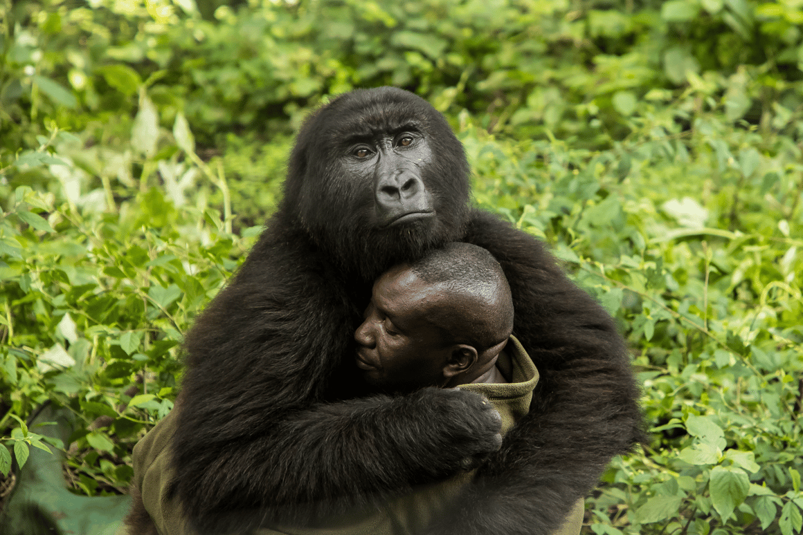 The Human Touch by James Gifford, Human/Nature Winner, Virunga National Park, Democratic Republic of the Congo