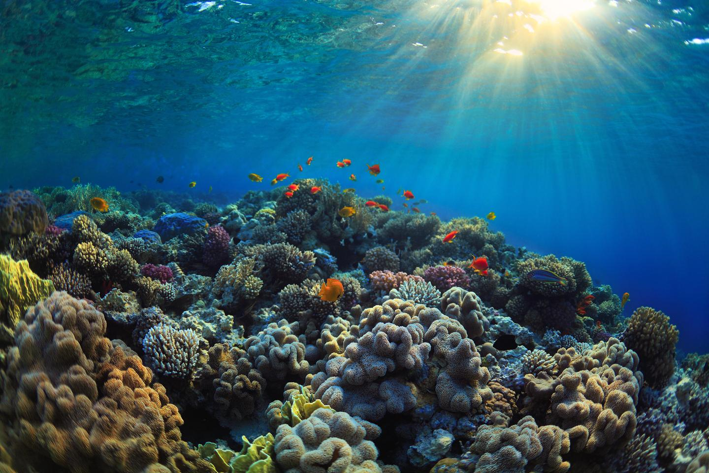 By searching seawater samples for DNA, scientists can tell how many living corals are present on reefs