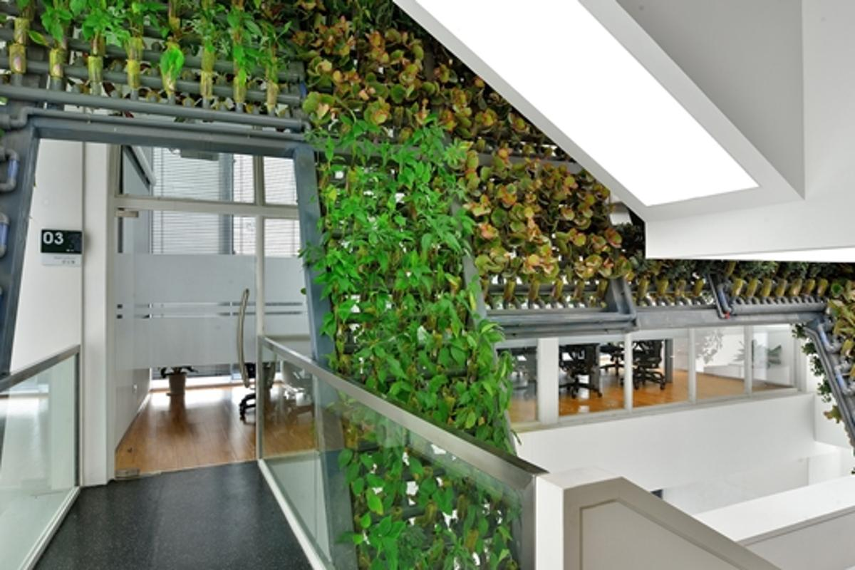 Ingameoffice has installed a green wall system into the TYJ Office Building in Shenzhen, China