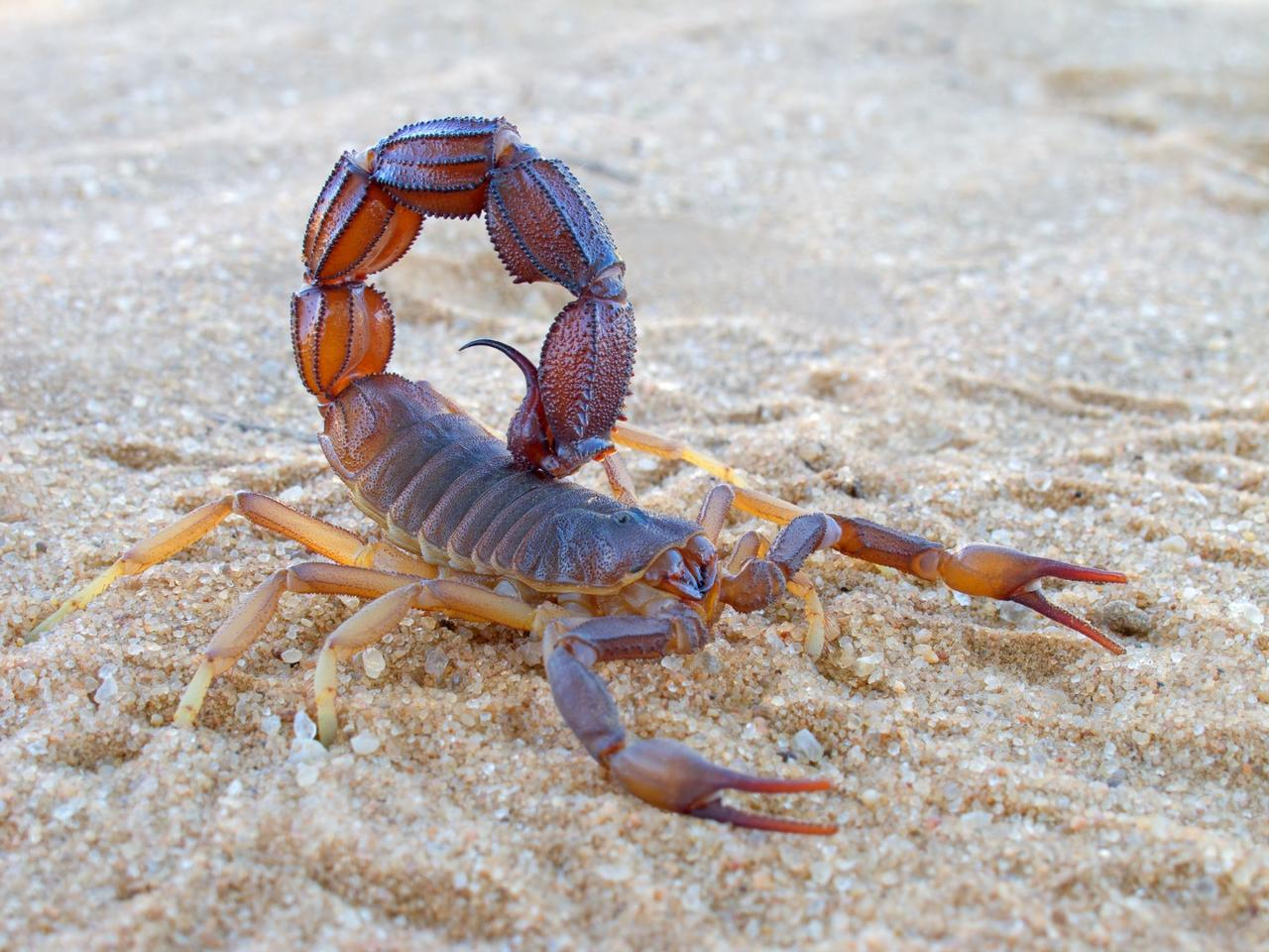 A peptide inscorpion venom was found to selectively bind to brain tumor cells, so a synthesized version was made for use in surgical imaging scenarios