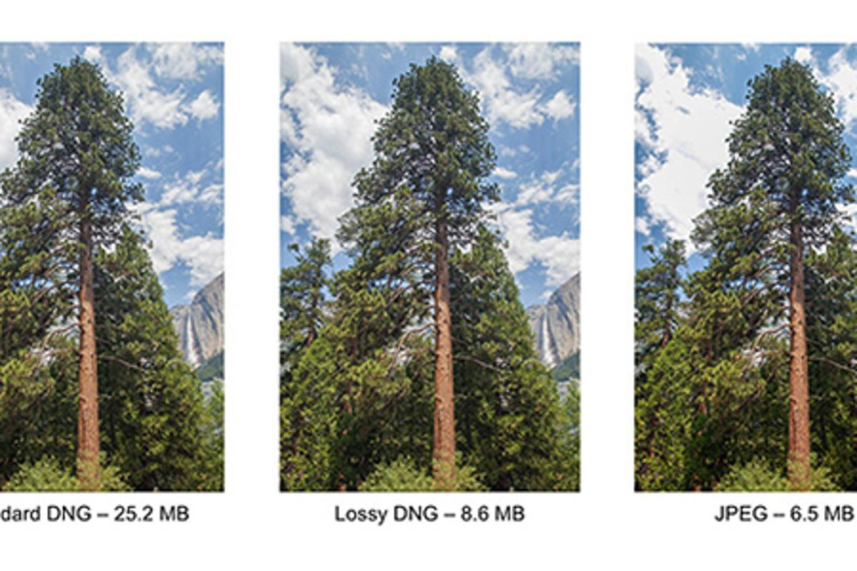 Adobe has introduced lossy compression to the DNG specification because of the gulf between the size of RAW and JPEG files