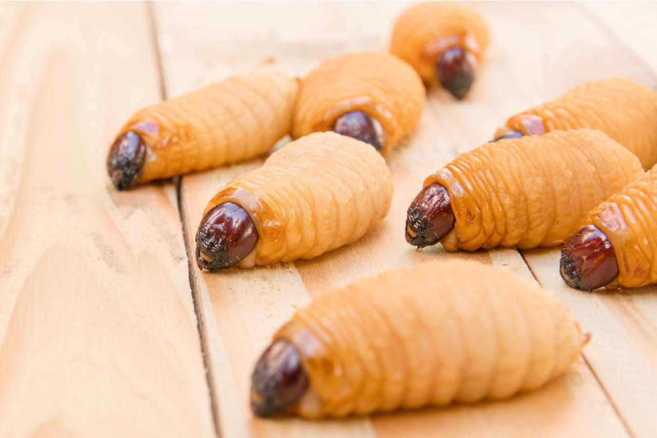 Red palm weevil larvae, which feed upon date palms after hatching