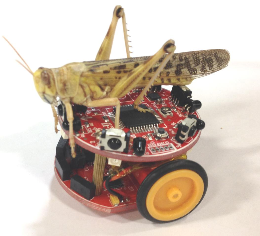 The Colias micro-robots, named after a genus of butterfly, were inspired by bees and locusts (Photo: University of Lincoln)