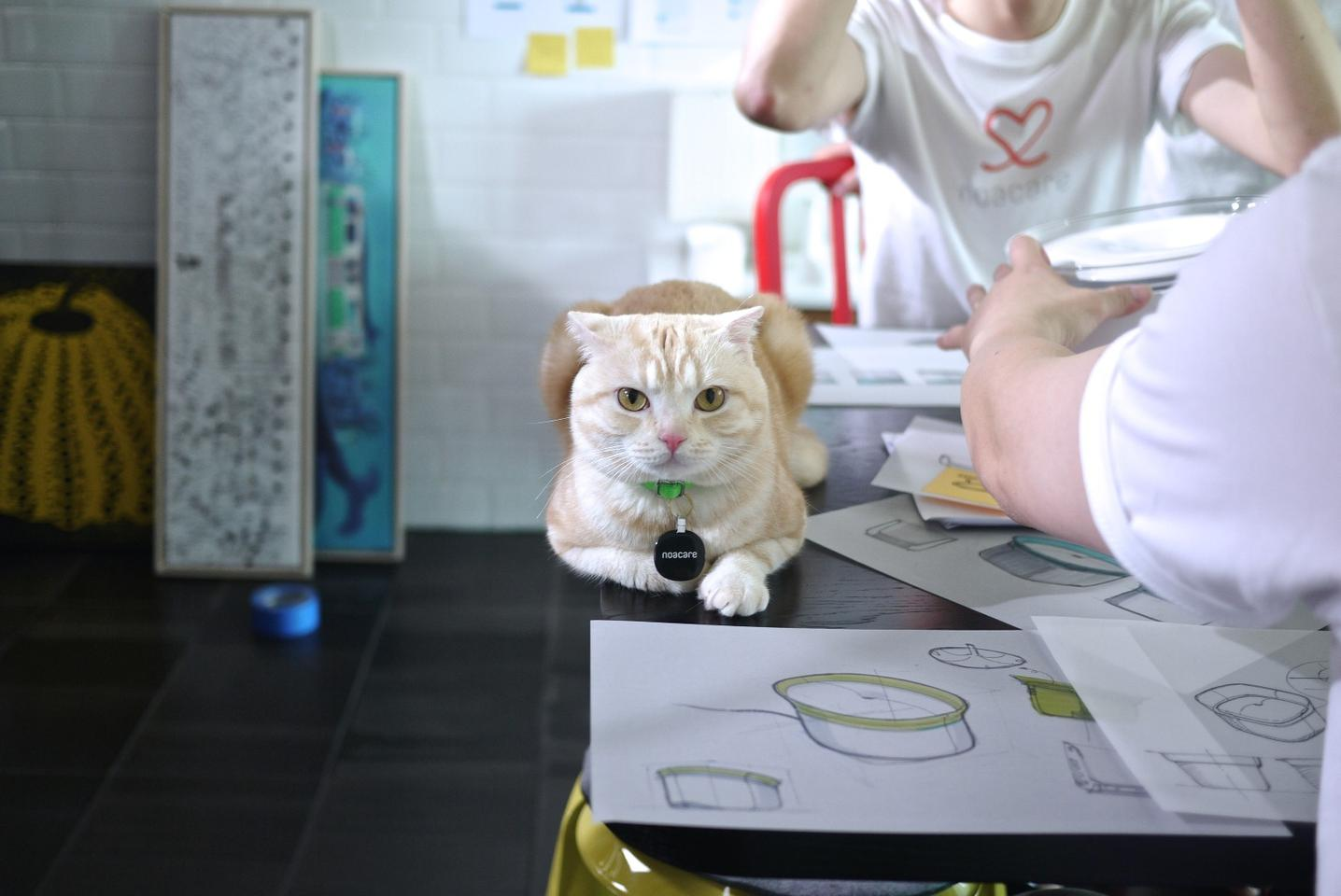 Many cats assisted in the making of Pura