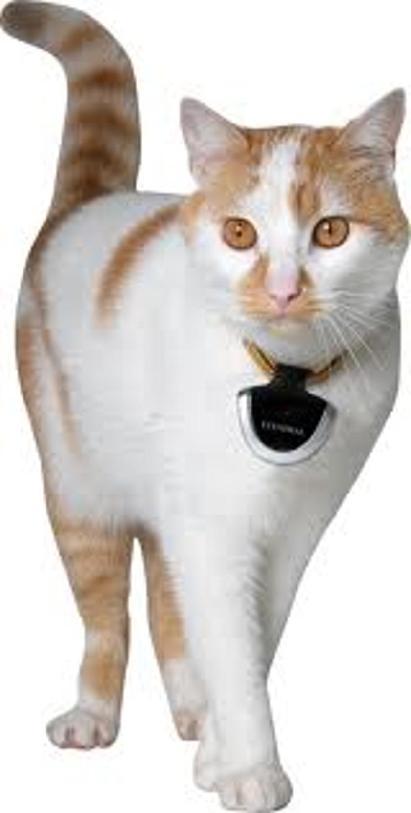 Gizmag's top 10 cat gadgets