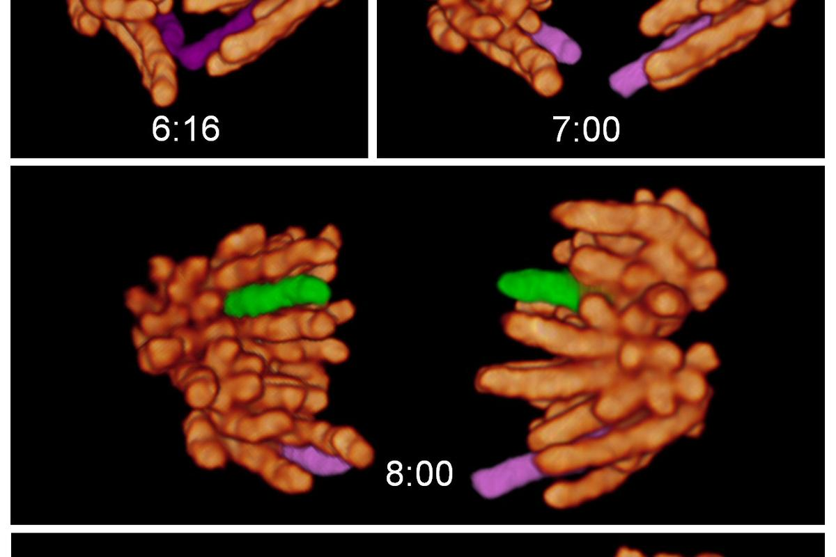A new kind of microscope has been invented that is able to non-invasively take a three dimensional look inside living cells with stunning results (Images courtesy of Betzig, Planchon, and Gao)