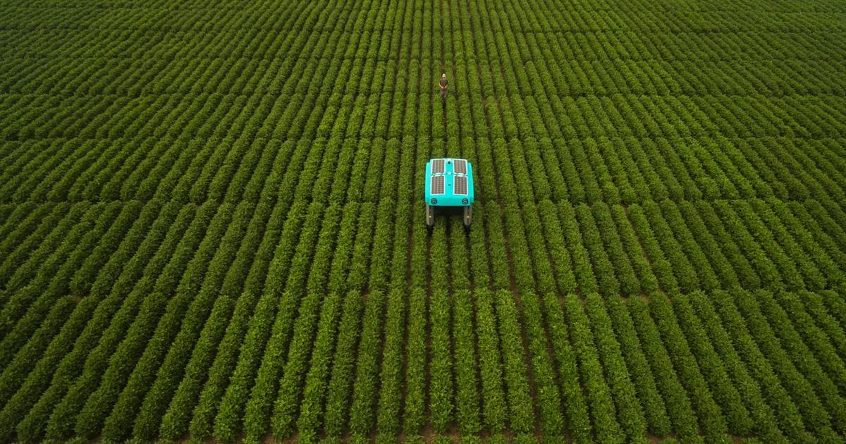 Alphabet builds a plant-inspecting buggy for sustainable farming