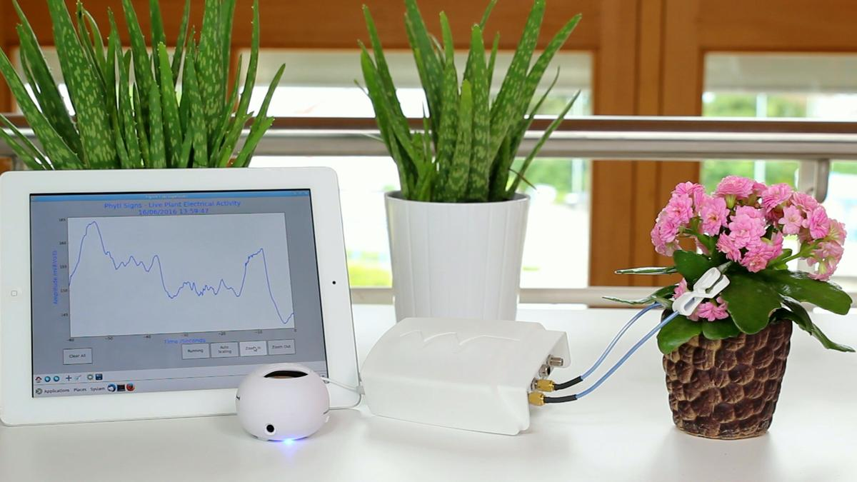 The Phytl Signs device picks up the tiny electrical signals emitted by plants