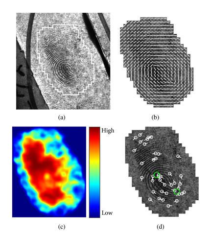 Automatically extracted features of a latent fingerprint: (a) Input latent with manually marked region of interest, (b) ridge flow overlaid on the cropped latent, (c) ridge quality map, and (d) features that can be used as points of comparison, including minutiae (white circles) and core points (green circles)