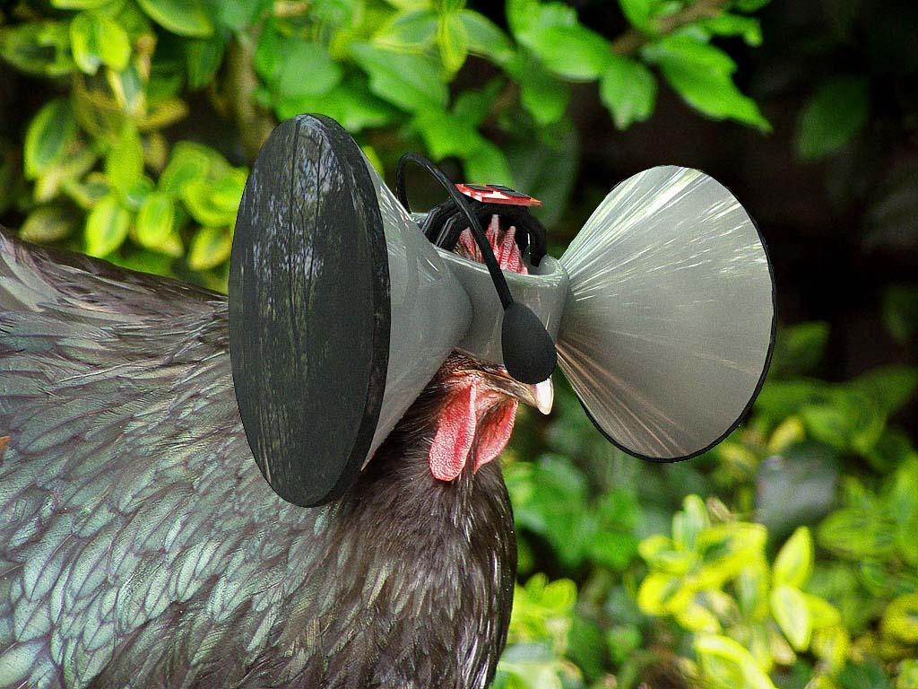 Second Livestock: 'Cockulus Rift' project aims to improve the lives of battery hens using Virtual Reality