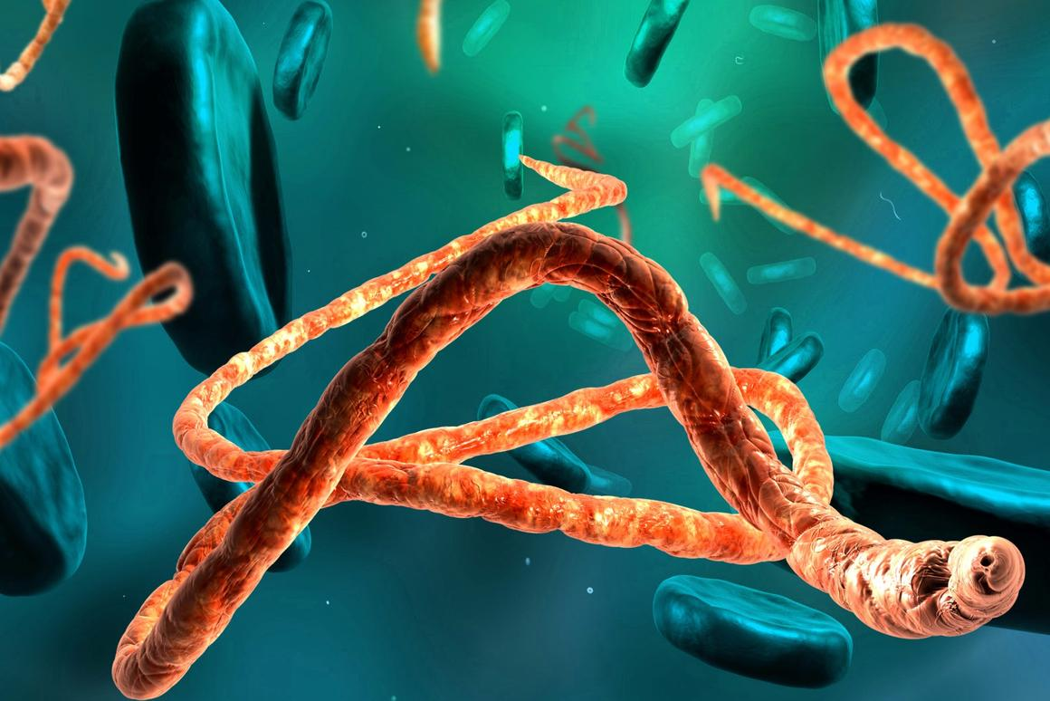 Could the antibodies from a human survivor hold the key to keeping the ebolavirus under control?