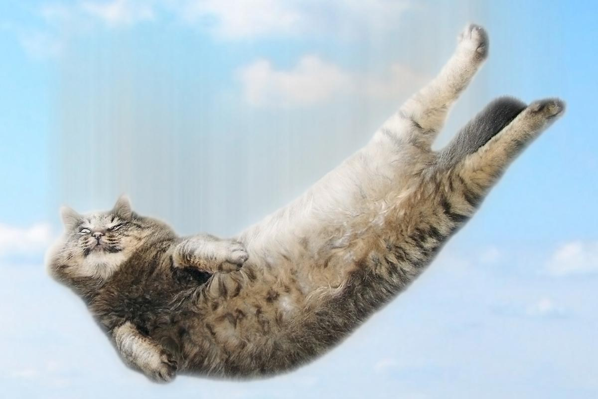 Researchers are studying the physics behind cats' ability to land on their feet to help improve robots (Image: Shutterstock)