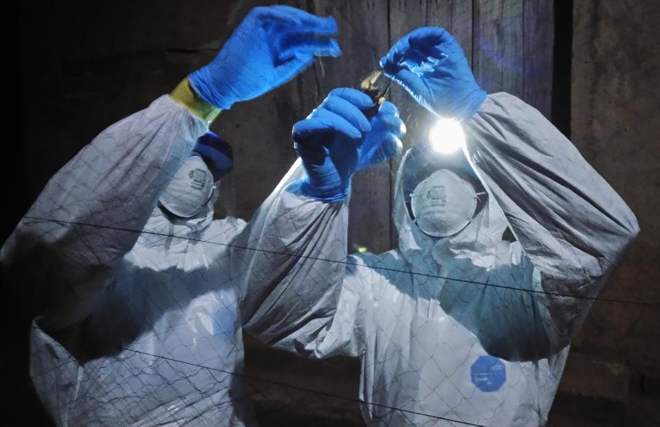 Scientists have discovered a new ebolavirus in free-tailed bats in Sierra Leone