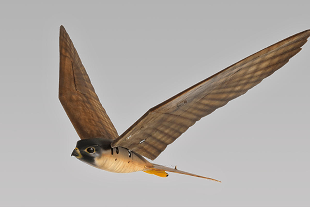 Robot raptors that fly like the real thing are designed to act as a deterrent to flocks of nuisance birds