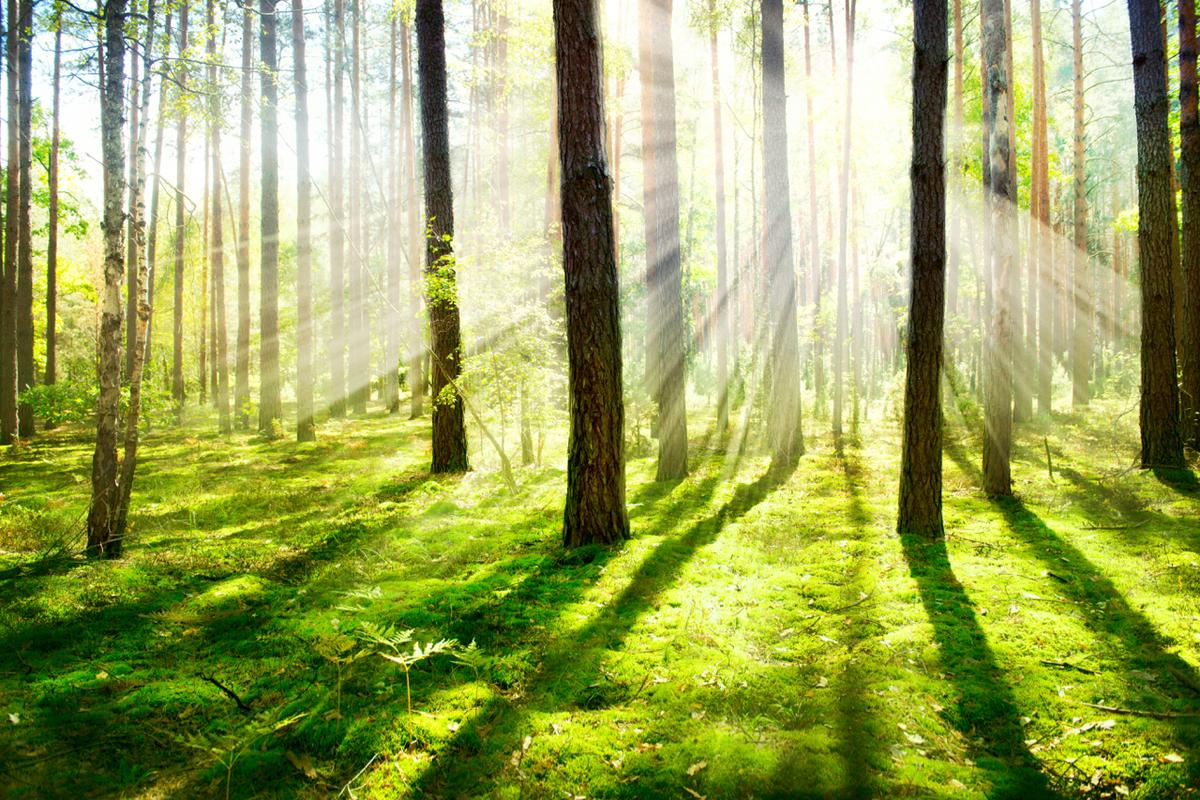 Finnish scientists can use lasers to identify different types of trees