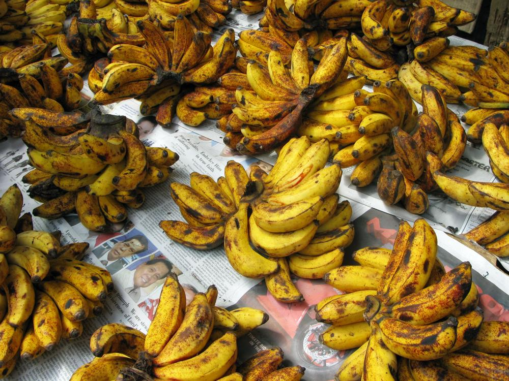 A three-fungus disease complex threatens to wipe out the world's banana crops within the next decade