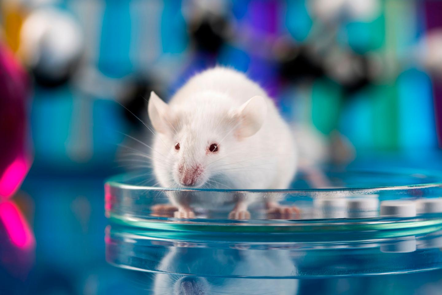 Blocking a single enzyme in mouse models has been found to completely inhibit the animal's ability to become obese