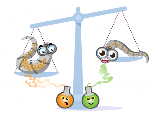 Cartoon image showing the effect of scents on lipid storage in the laboratory worm C. elegans.