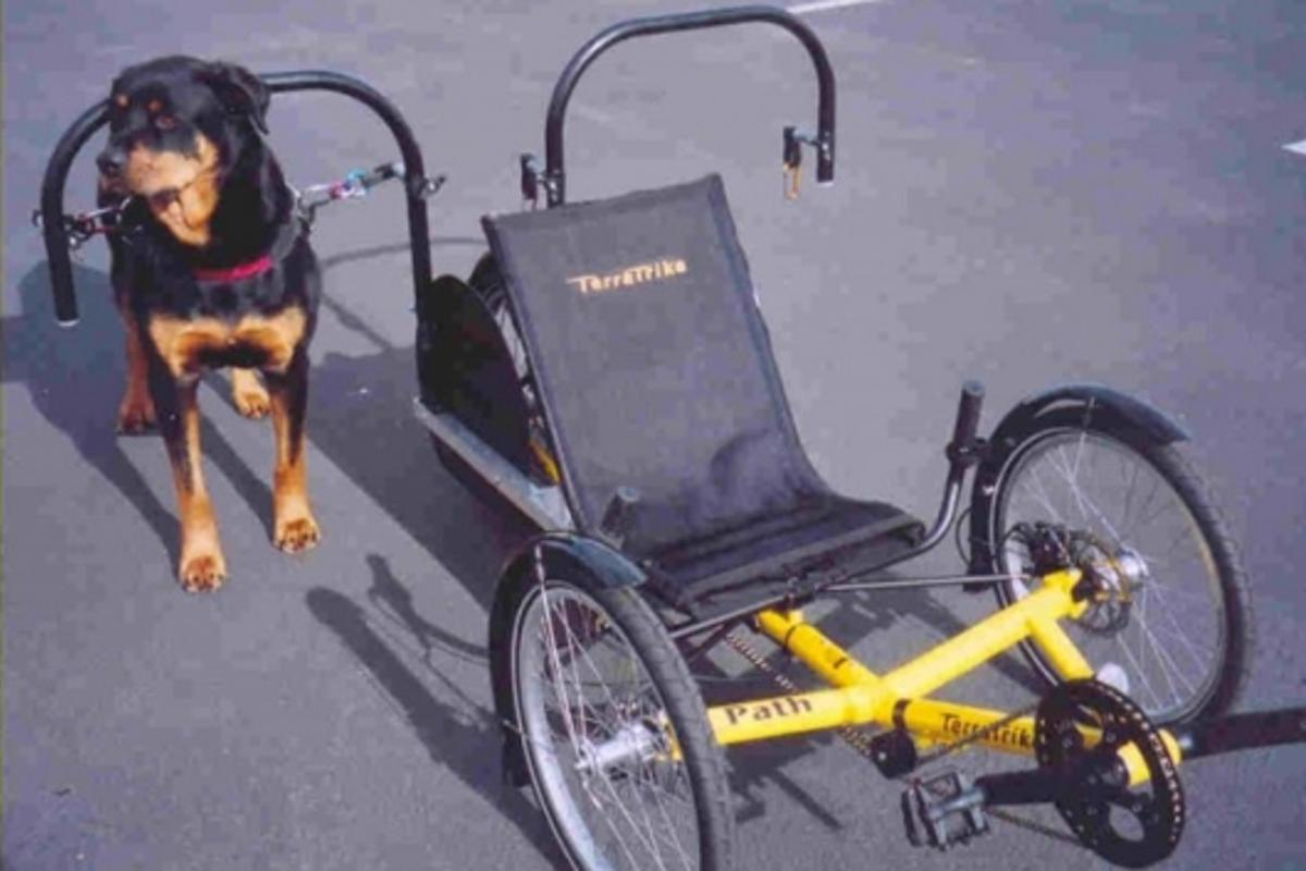 Dog-powered recumbent trike