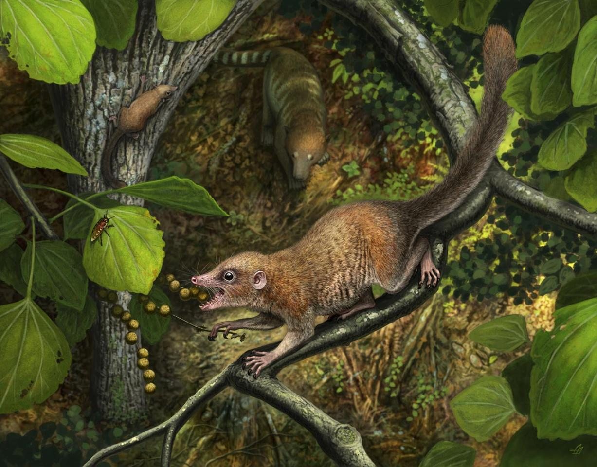 An artist's illustration of Purgatorius mckeeveri, a newly described species of early primate