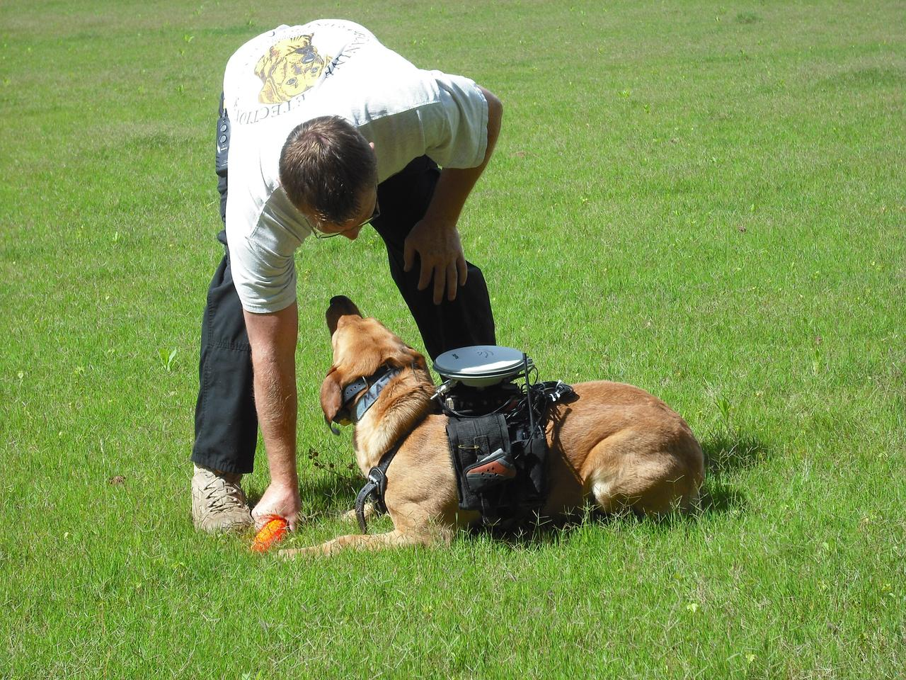 In tests conducted in structured and unstructured environments, dogs using the system reportedly showed an overall obedience accuracy rate of nearly 87 percent