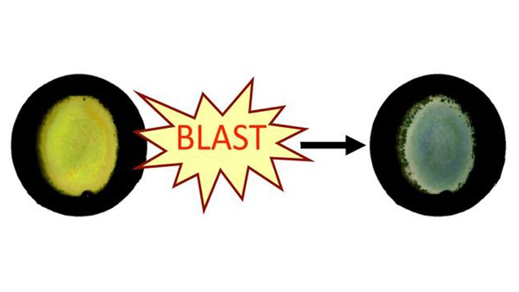 "Blast exposure disrupts the nanostructure of the ""Blast Badge,"" resulting in clear changes in color (Image: Douglas H. Smith, UPenn School of Medicine)"