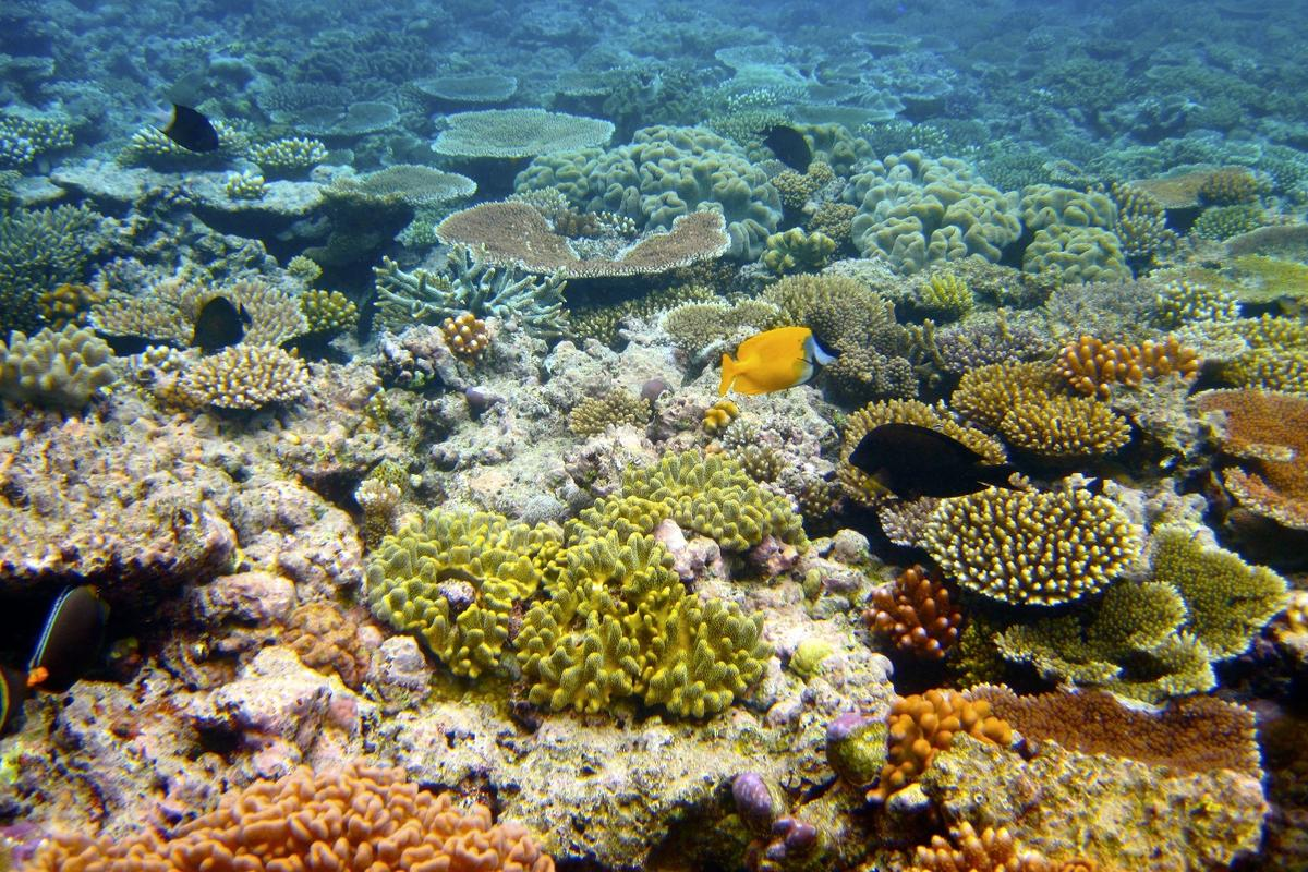 In 100 years, the Great Barrier Reef could look very different to the way it does today