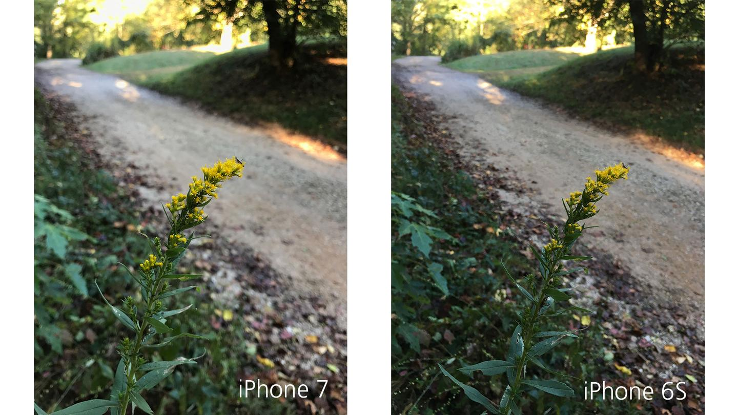 The iPhone 7's photo (left) is more bokeh-rich, but not dramatically so.
