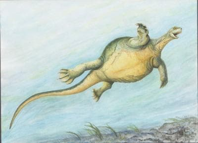 "Although Eorhynchochelys' long-tailed body did have the ""Frisbee shape"" of today's turtles, its spine and ribs still hadn't joined together to form a single shell"