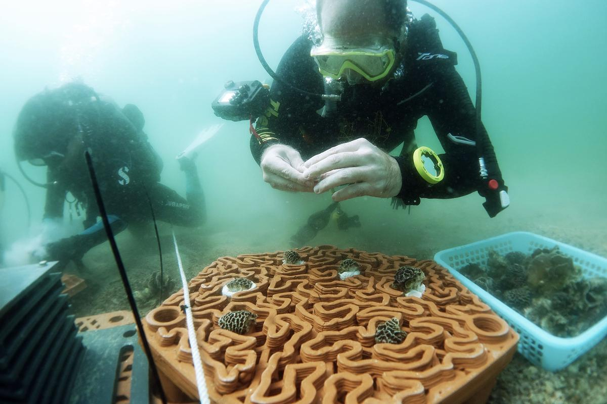 The reef tiles were deposited last month at three test sites in Hong Kong waters