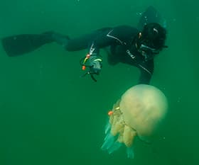 A diver tagging a jellyfish in waters off France