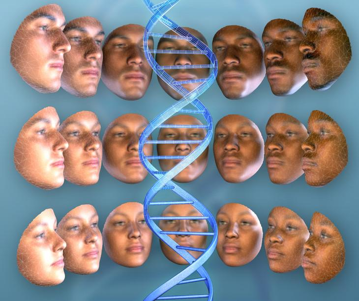 It may someday be possible to ascertain someone's appearance by analyzing their DNA