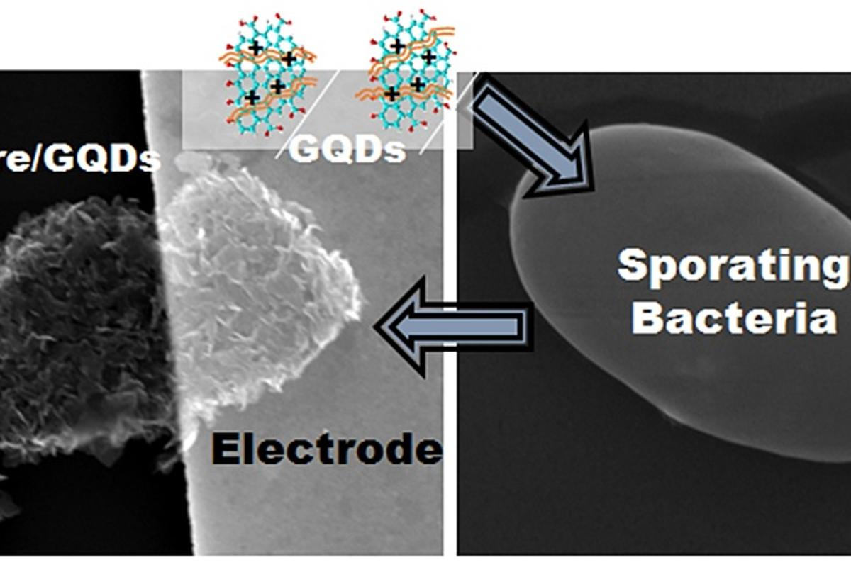 """Researchers have created a nanoscale biomicrorobot (or """"cytobot"""") that responds electrically to changes in its environment (Image: UIC)"""