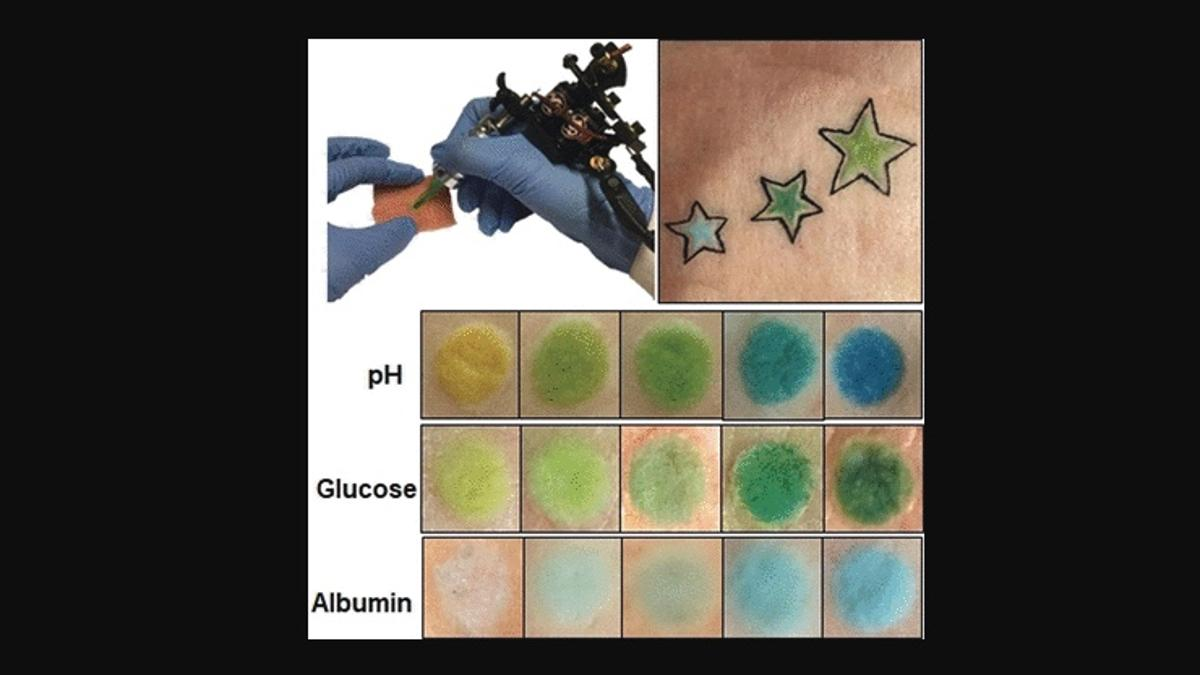 Some of the colorimetric tattoos, which were made on pig skin