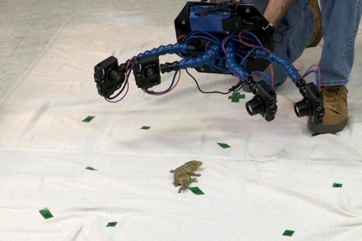 Beastcam is used on a gecko in Duncan Irschick's lab
