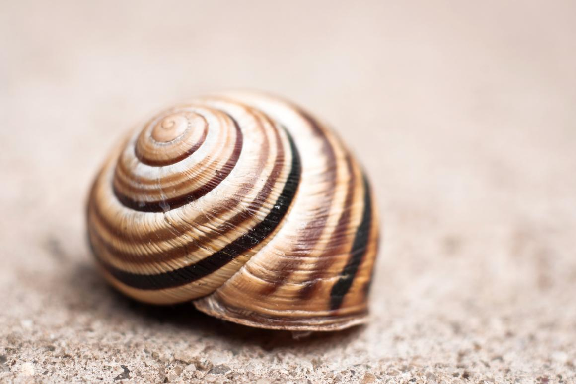 The way snails control the growth of their shells has provided inspiration for a new approach to making lithium-ion batteries (Photo: Shutterstock)