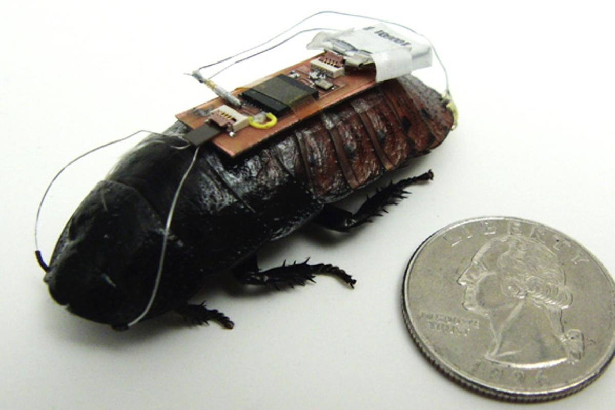 Researchers at North Carolina State University have used the Xbox Kinect to put roaches on autopilot