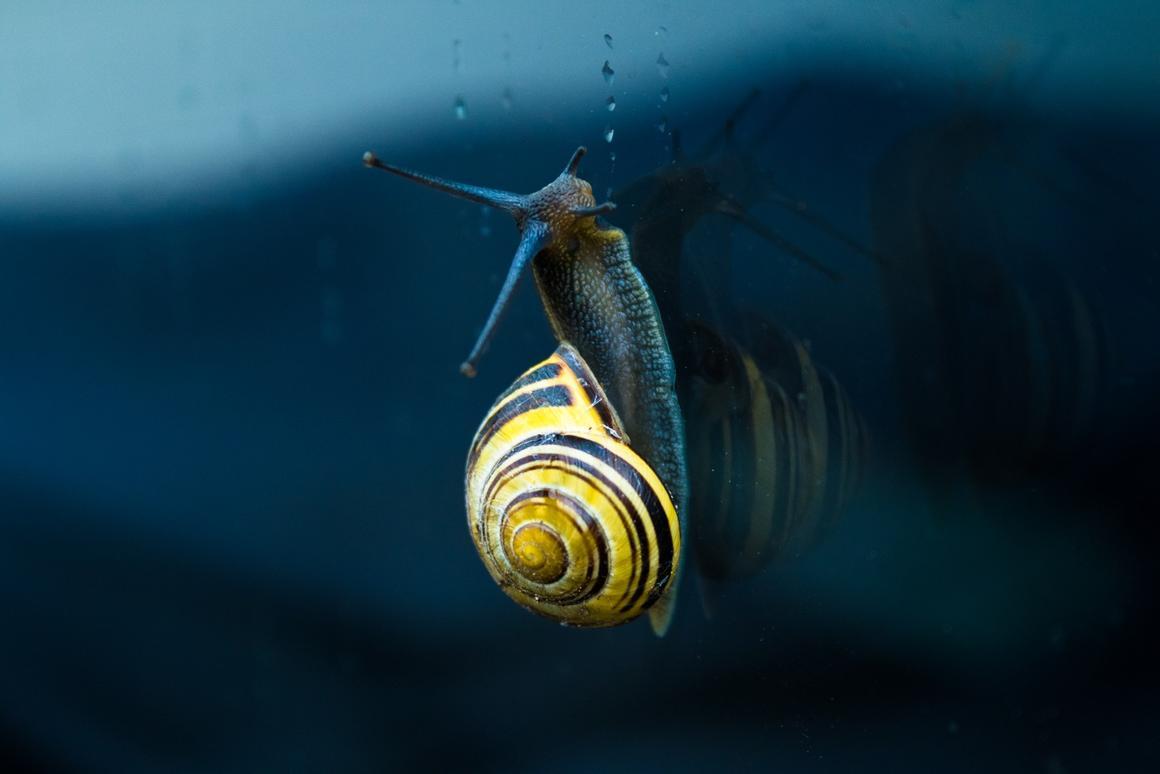Snail slime inspires reversible, super-strong glue